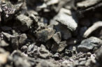 Strong NSW coal demand drives job growth