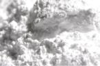 High-grade kaolin a priority for Australia