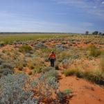 Golden future for the Pilbara