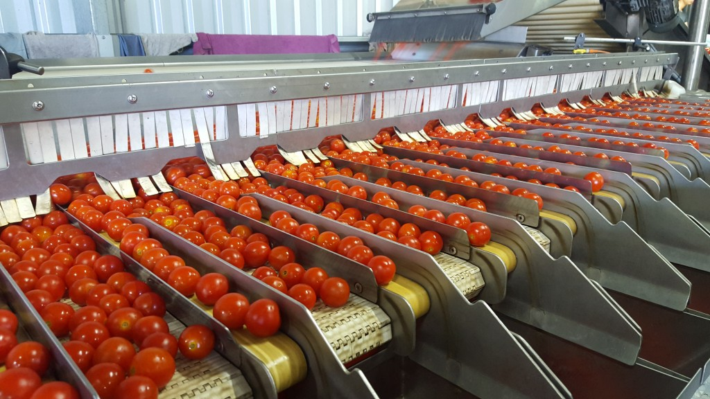 Automated food sorting machines to grow at seven per cent CAGR by 2021 -  Food & Beverage