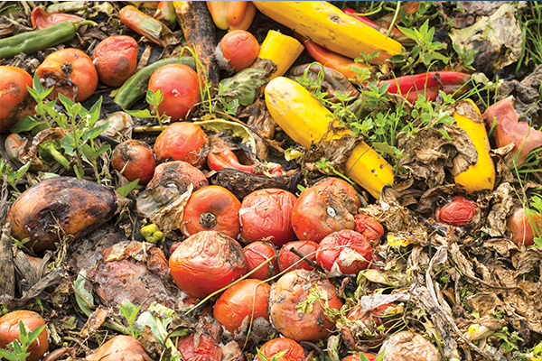 Fed Govt commits $4M to fight food waste